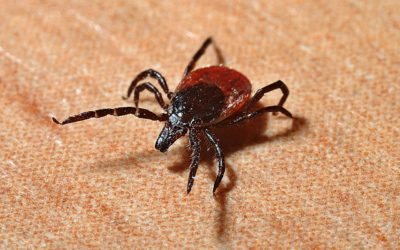 Does the Ozone High Dose cure Lyme disease?